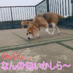 2_20110107150740.jpg