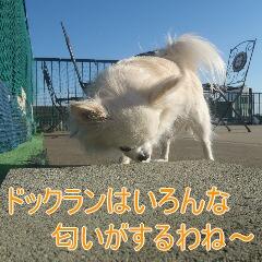2_20110108153943.jpg