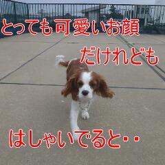 2_20110110171142.jpg
