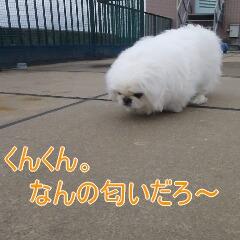 2_20110110171954.jpg