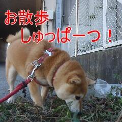 2_20110110172405.jpg