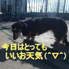 2_20110110172547.jpg