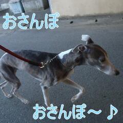 2_20110110172750.jpg