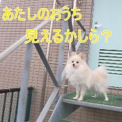 2_20110110172938.jpg
