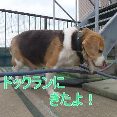 2_20110110173159.jpg