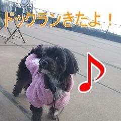 2_20110113190055.jpg