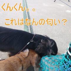 2_20110114161142.jpg