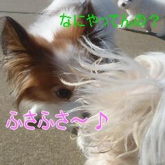 2_20110121163653.jpg