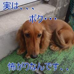 2_20110126153549.jpg