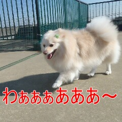 2_20110131170932.jpg