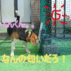 3_20100217163516.jpg