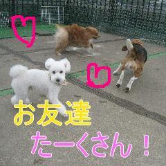 3_20100217164440.jpg