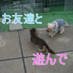 3_20100324184252.jpg