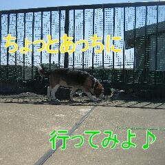3_20100603153312.jpg