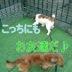 3_20100609122846.jpg