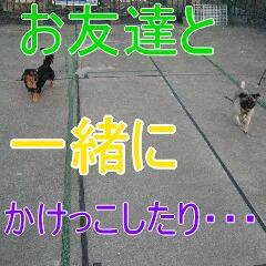 3_20100709132411.jpg