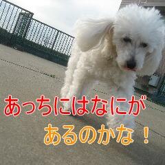 3_20100710191230.jpg