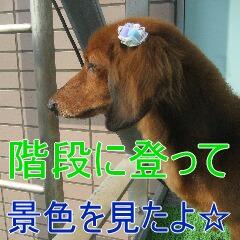 3_20100710191859.jpg