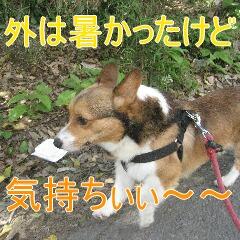 3_20100710192218.jpg