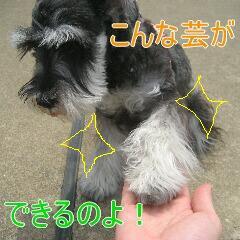 3_20100710192458.jpg