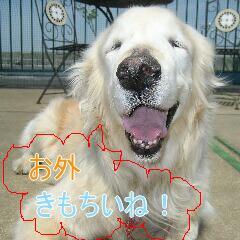 3_20100712141411.jpg