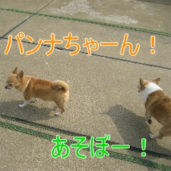 3_20100714151551.jpg