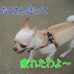3_20100716155722.jpg