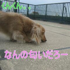 3_20100716160602.jpg
