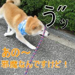 3_20100904185222.jpg