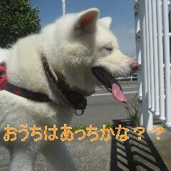 3_20100905164950.jpg