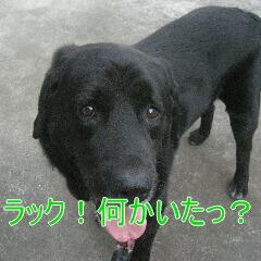3_20100905170053.jpg