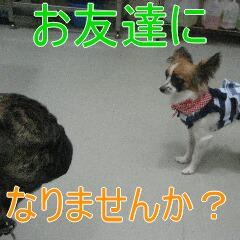 3_20100918194850.jpg
