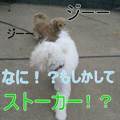 3_20101002195226.jpg