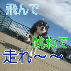 3_20101002195548.jpg