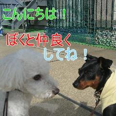 3_20101005155104.jpg
