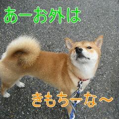 3_20101019165748.jpg