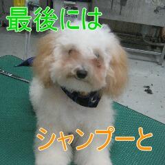 3_20101019170140.jpg
