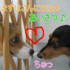 3_20101022151919.jpg