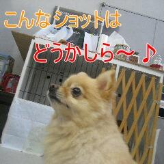 3_20101022153029.jpg