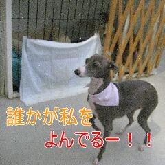 3_20101031113954.jpg