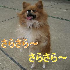 3_20101104151511.jpg