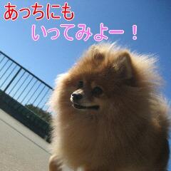 3_20101104151619.jpg