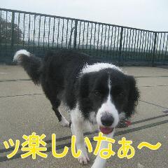 3_20101113161201.jpg