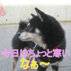 3_20101113161349.jpg