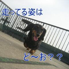 3_20101117160149.jpg