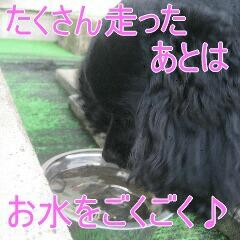 3_20101119161043.jpg