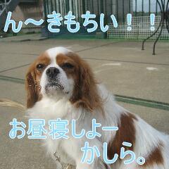 3_20101119161544.jpg