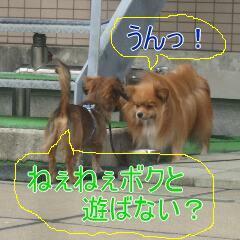 3_20101119161822.jpg