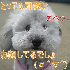 3_20101119162145.jpg
