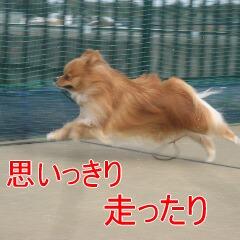 3_20101119162614.jpg